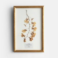 PLACER WORKSHOP / GOLDEN WOOD FRAME