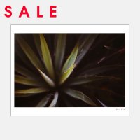 【SALE】Alicia Bock Photography / Yucca #1 330×254mm