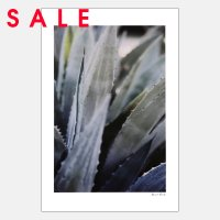 【SALE】Alicia Bock Photography / Winter Agave #2 254×380mm