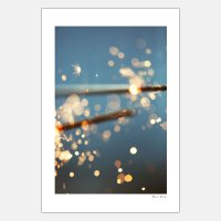 Alicia Bock Photography / Spark 254×380mm