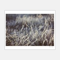 Alicia Bock Photography / Frosted #2 330×254mm