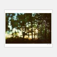 Alicia Bock Photography / In Secret 330×254mm