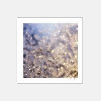 Alicia Bock Photography / Winter Aglow 254×254mm